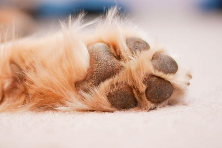 Las Almohadillas de nuestras mascotas