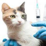 Las vacunas y los gatos