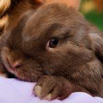 Atención sanitaria básica en conejos