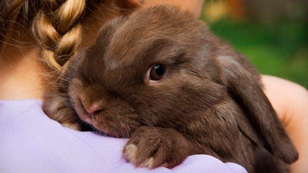 cuidados-basicos-conejos
