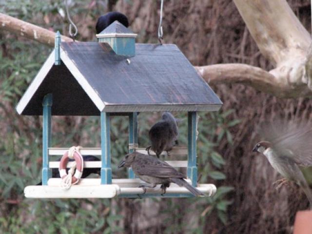 pájaros silvestres jardín