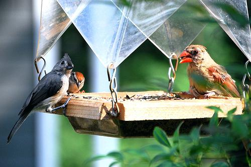 Atraer aves silvestres a su jardín